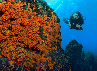 It´s time to dive dive dive.