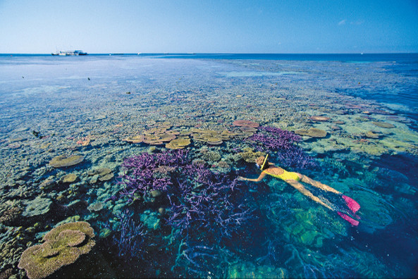 Snorkling on The Great Barrier Reef