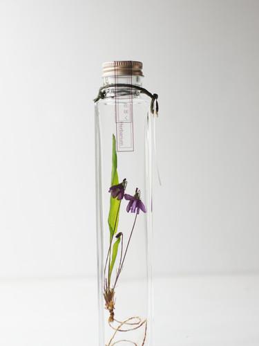 花咲くハーバリウムスミレ