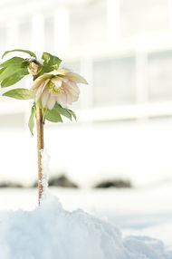 冬 (2).JPG