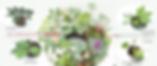 4種のクリスマスローズを使ったリース.png