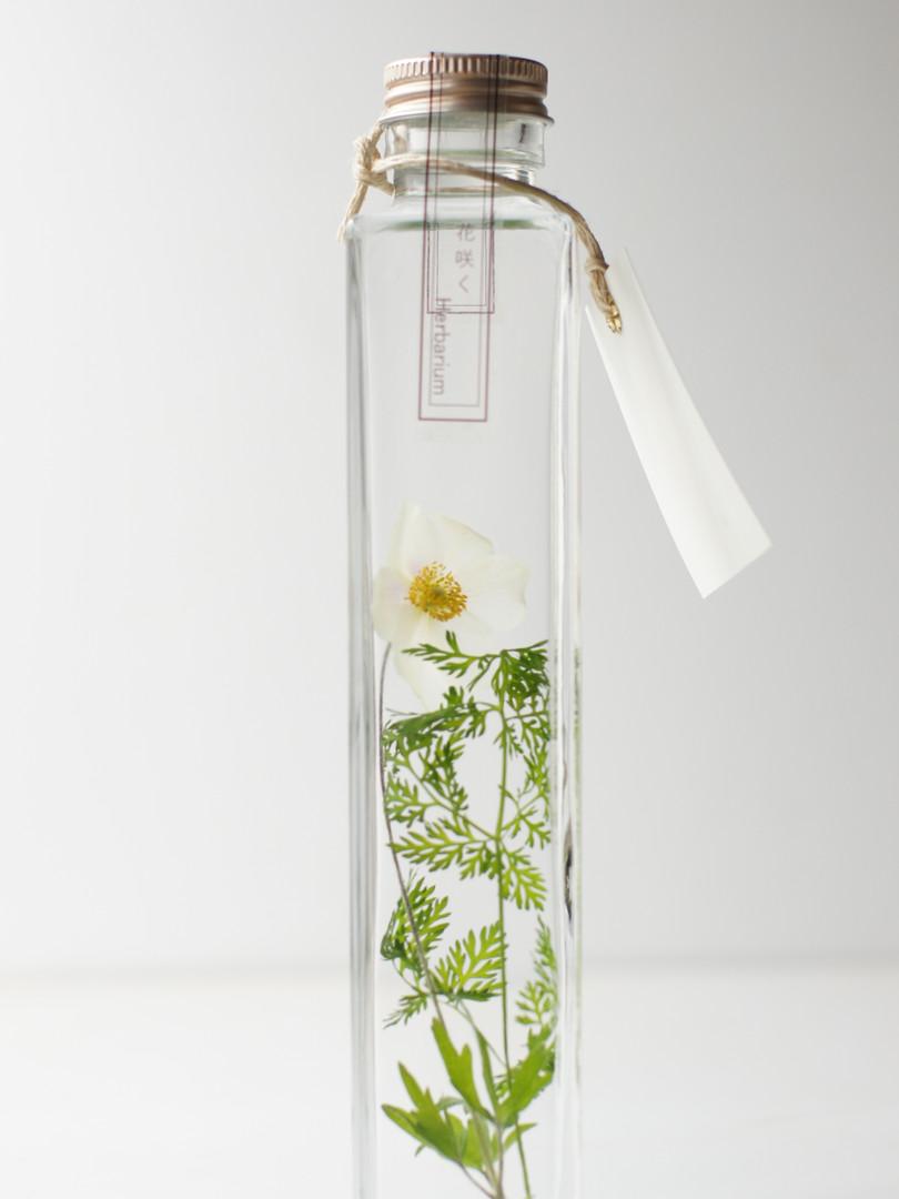 花咲くハーバリウム アネモネ シルベストリス