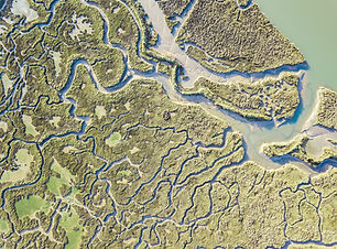 aerial view of marshland.jpg