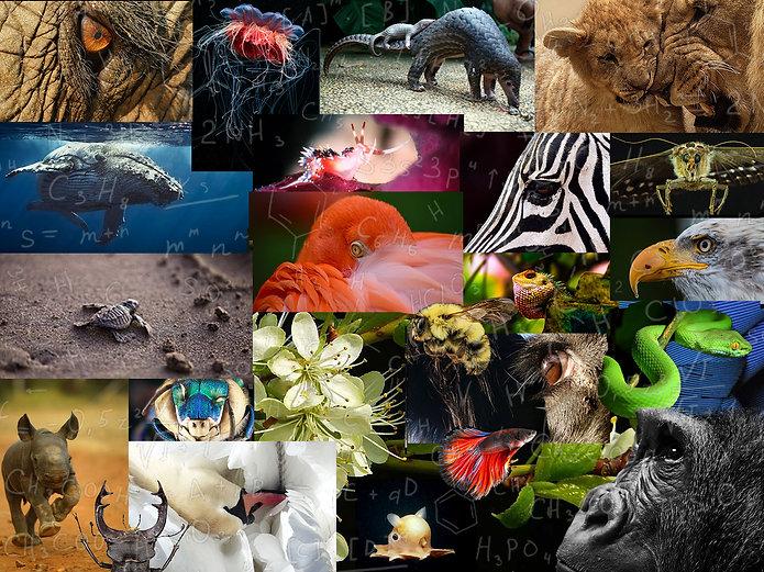 biodiversity-enlivenment-maxkaizen.jpg