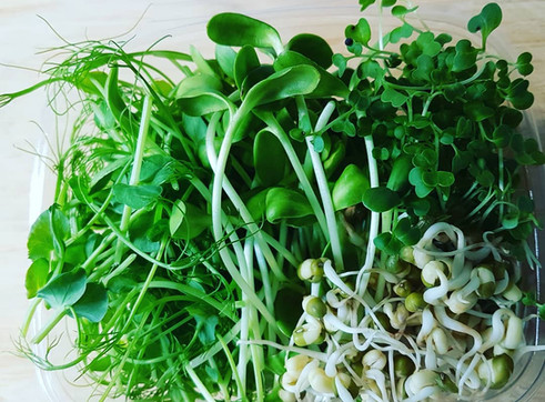 New Product!  Organic Microgreens, Magic
