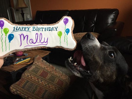 It's Molly's birthday❣Well adoption day,