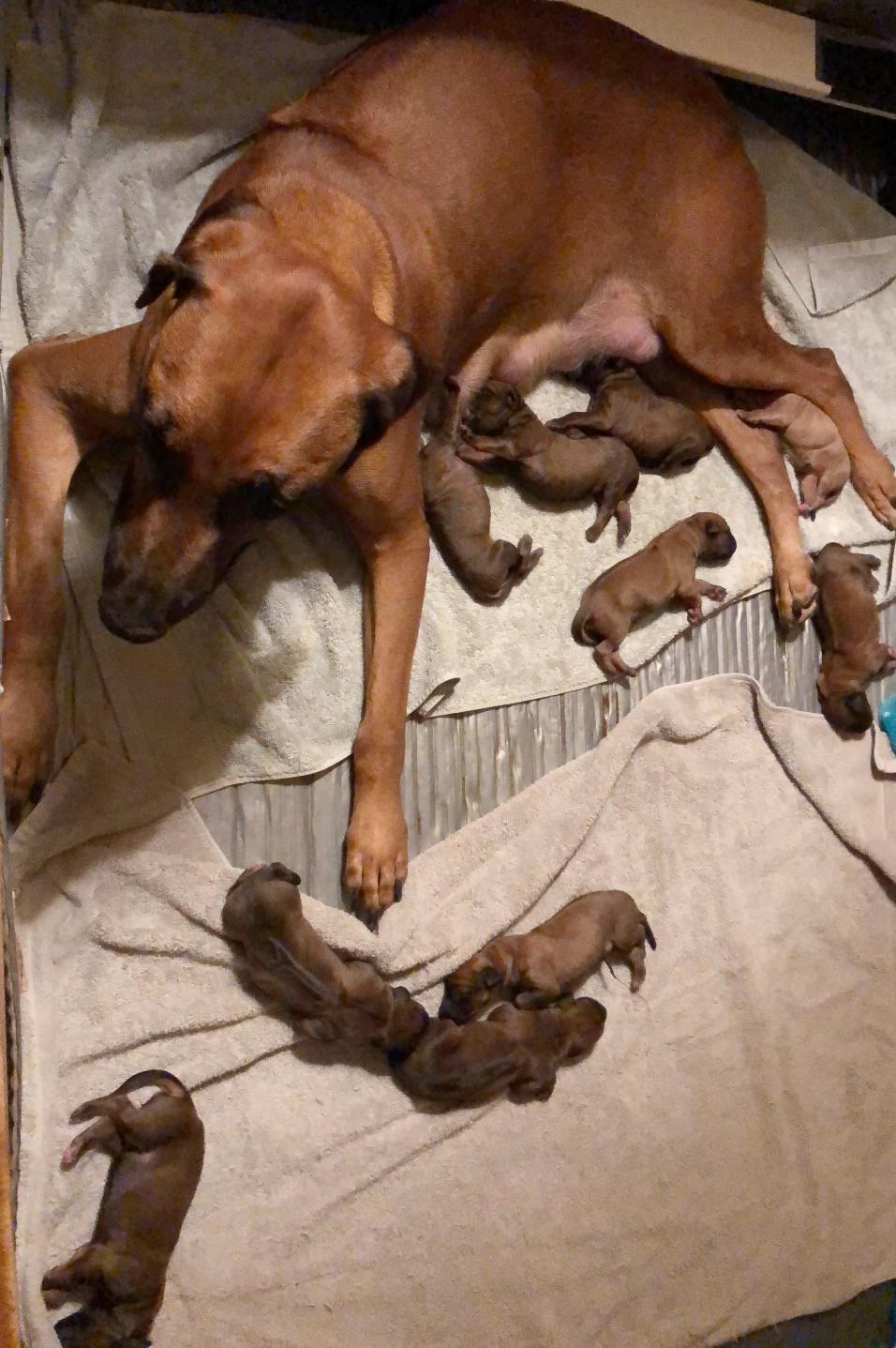 Rafiki gave birth to 10 beautiful pups (5 girls and 5 boys).