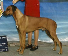Savanna ridgebacks_Shangani