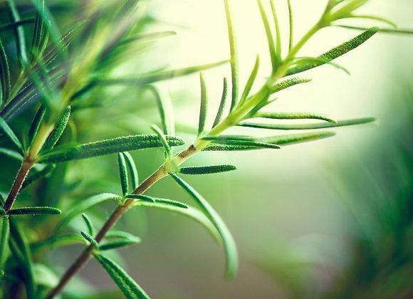 Rosemary Beet Green Tea