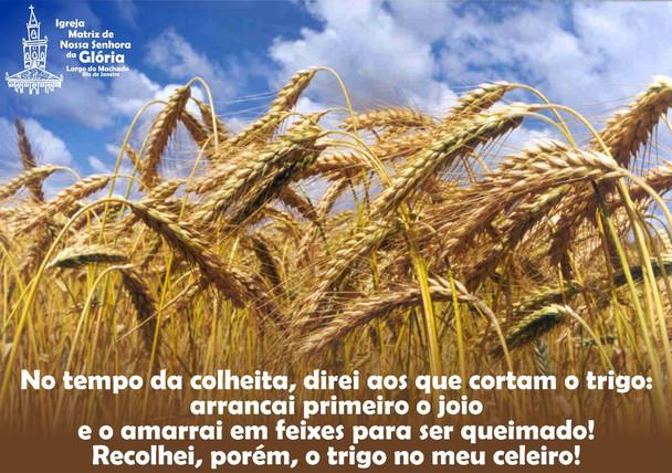 No tempo da colheita, direi aos que cortam o trigo: arrancai primeiro o joio e o amarrai em feixes p