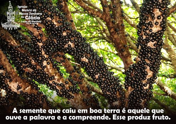 A semente que caiu em boa terra é aquele que ouve a palavra e a compreende. Esse produz fruto.