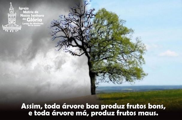 Assim, toda árvore boa produz frutos bons, e toda árvore má, produz frutos maus.