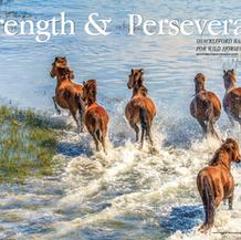 Strength & Perseverance
