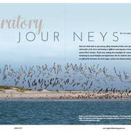 Migratory Journeys