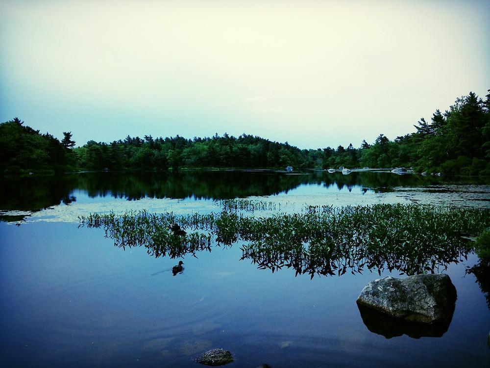 monkey weddings & summer sapphires lakes life in nova scotia