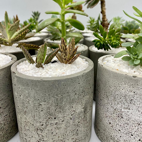 Maceta Cilindro con planta