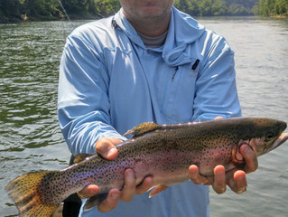 Cumberland River Fishing Report 6-14-18