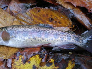 Fishing Report 10-31-15