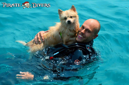 Dogs can scuba dive too - Koh Phangan