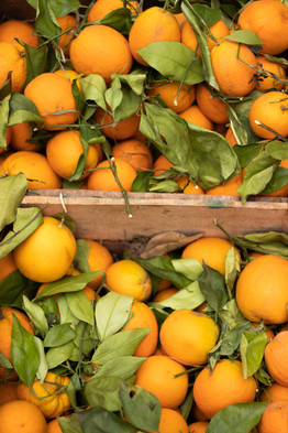 fresh oranges marrakech under a palm tree photography marrakech