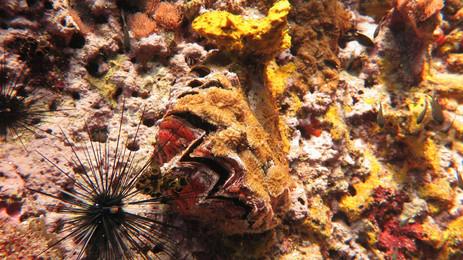 Sea Orchin's at Sail Rock