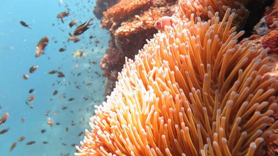 Coral Reef Sail Rock Koh Phangan