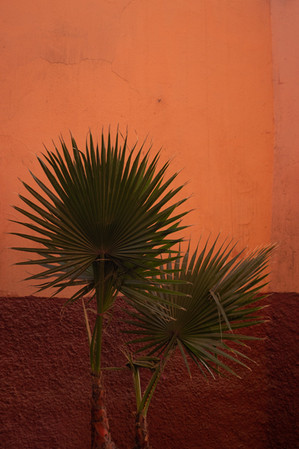 palm tree leaves orange wall red paint marrakech