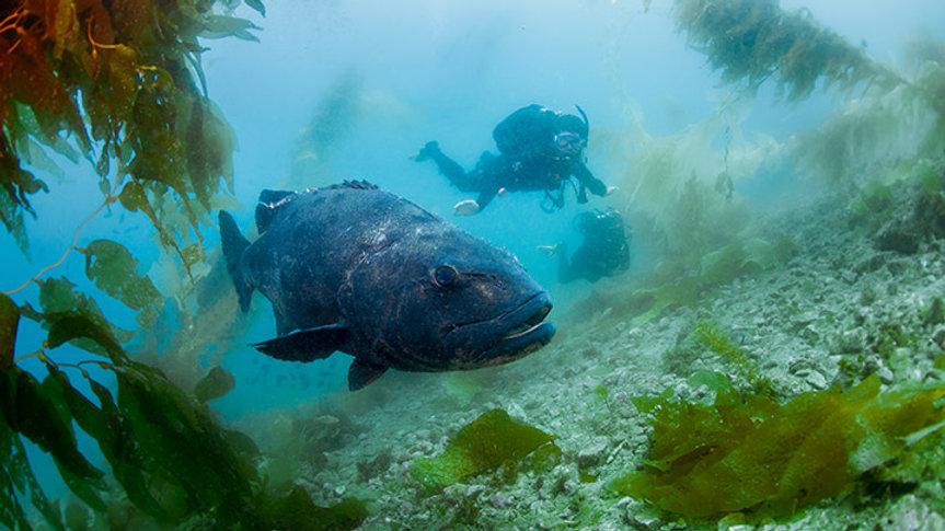 AWARE Fish Identification