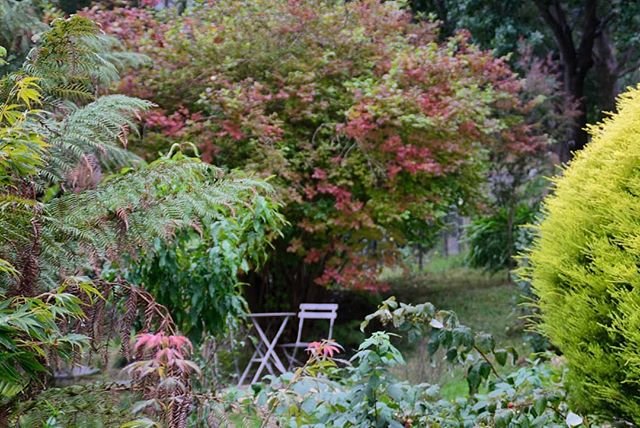 Autumn vibes in the front garden 🍁🍂🍃�
