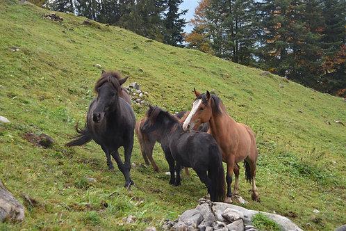Familienabo Ponyreiten