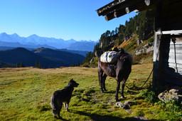 Ursus, Eiger, Mönch und Jungfrau