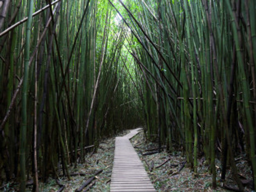 Beyond Knowledge, Wisdom from the Bamboo Forest