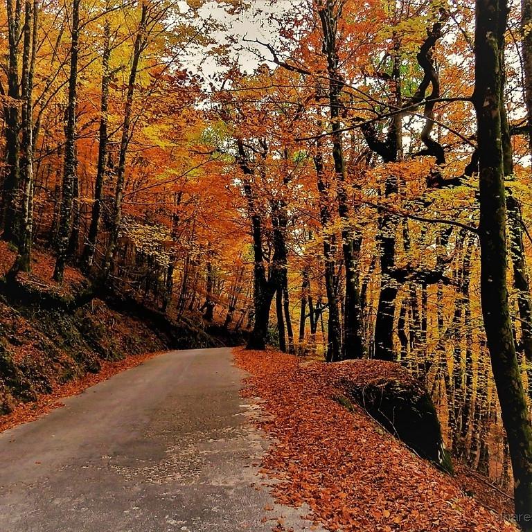 Outono na Albergaria - Gerês