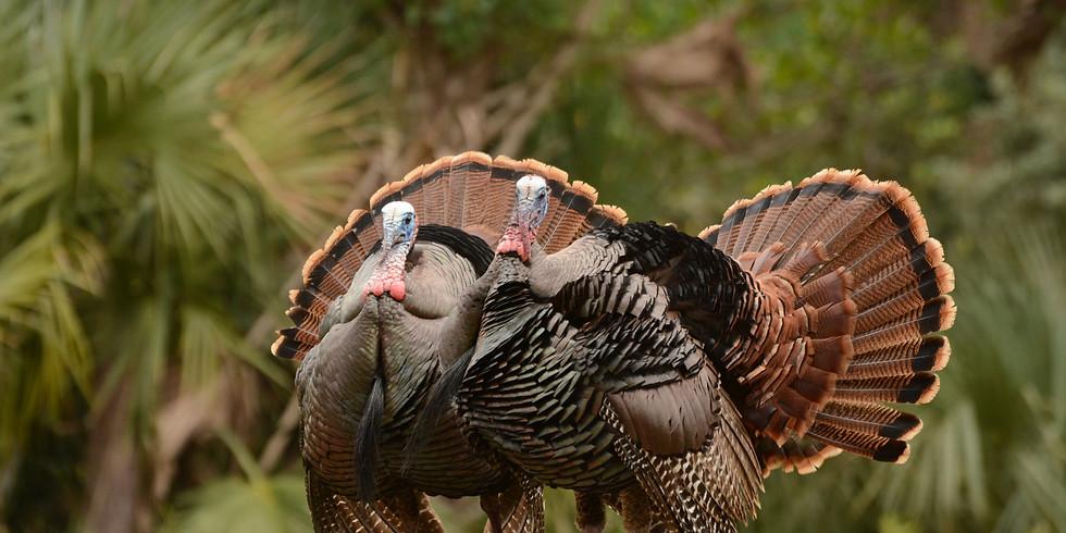 Polk County / Hampton Youth Hunt (Turkey & Hog) March 11-13