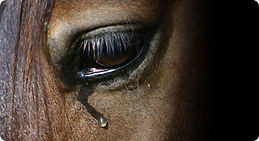 Horse tear .jpg