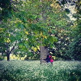 humans hugging a tree.jpeg