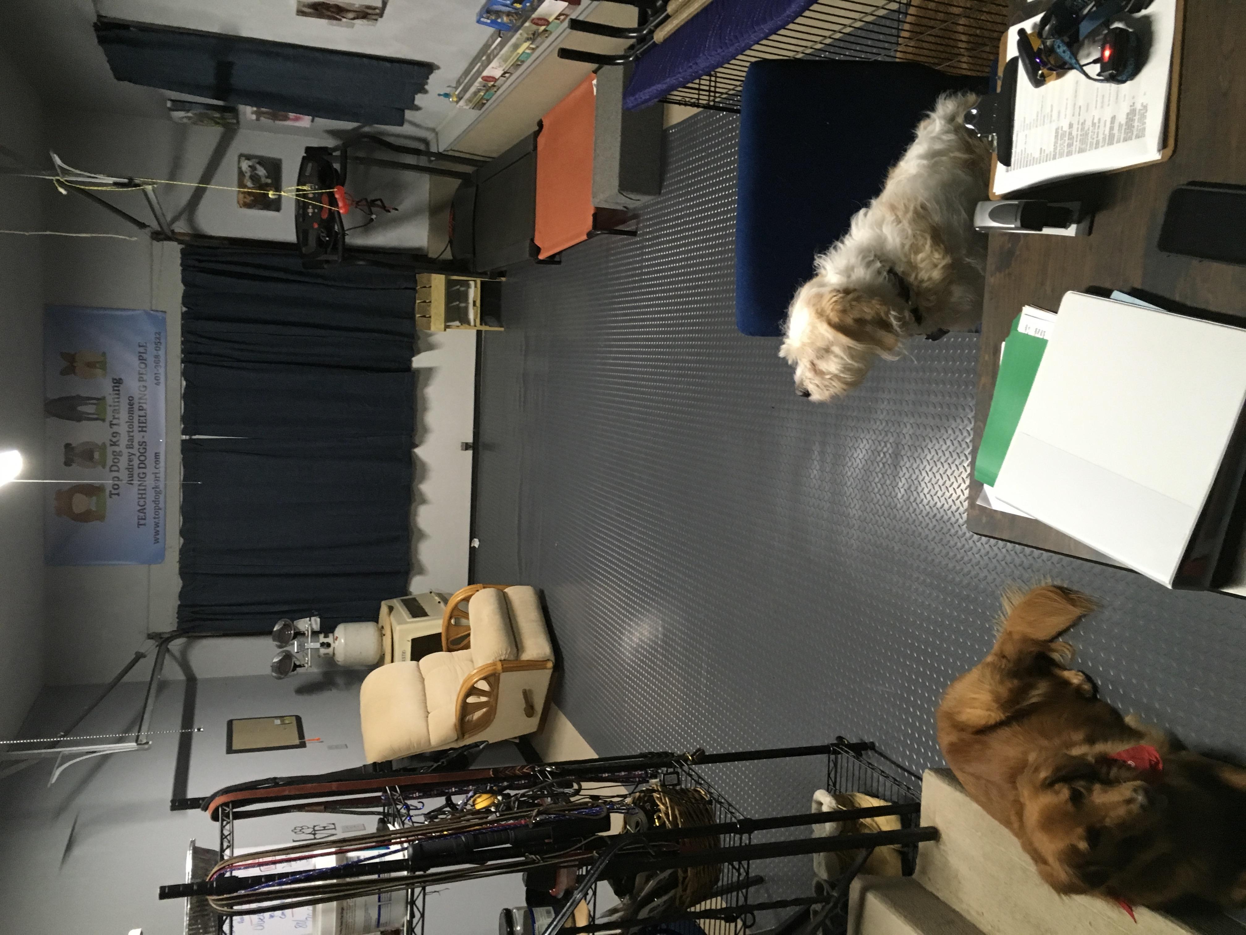 Top Dog Training Studio