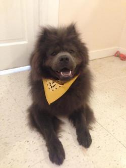 Rhode Island Dog Trainer, Top Dog K9