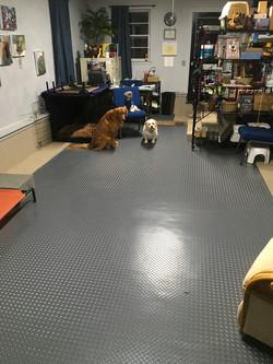 Top Dog Studio