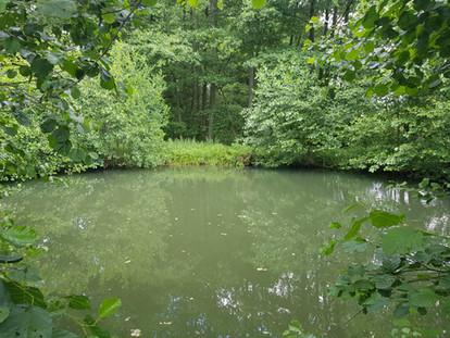 Kleiner Teich Hessen Angeln