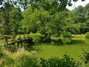 Teichanlage Hessen Angeln