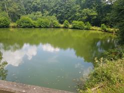 Teich 1 Hessen Angeln