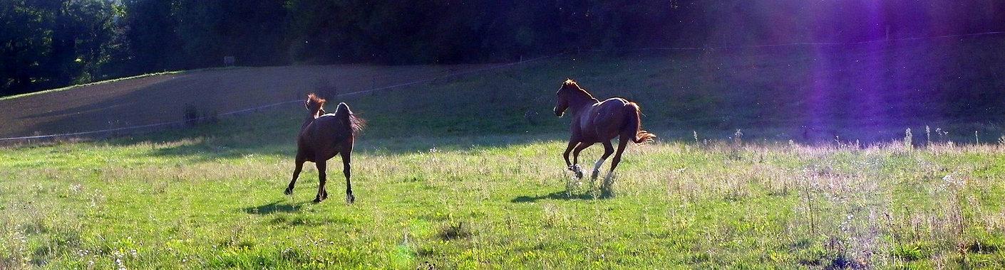Près_chevaux.jpg