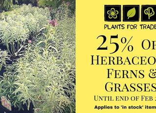 25% off Herbaceous Perennials