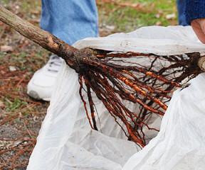 Rootball and Bareroot Tree Price List