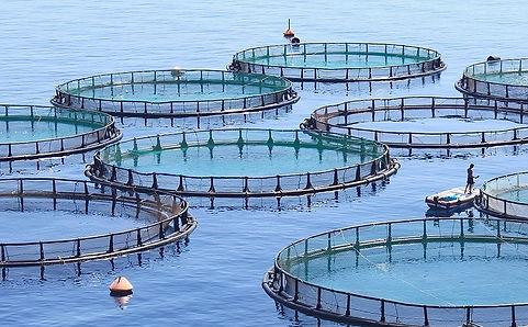 Smart Aquaculture
