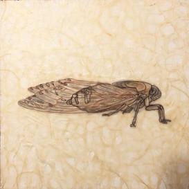 Wax Cicada