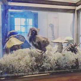 Chick Diorama
