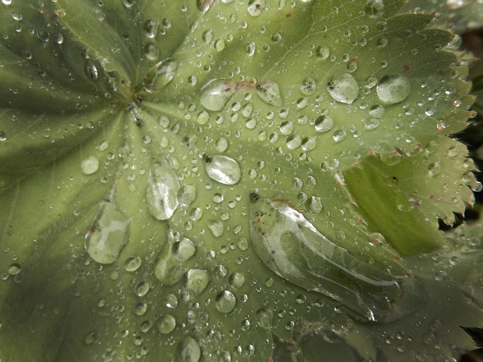 COLOUR - Leaf by John Belshaw (6 marks)