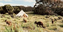 Stokes Bay Kangaroos
